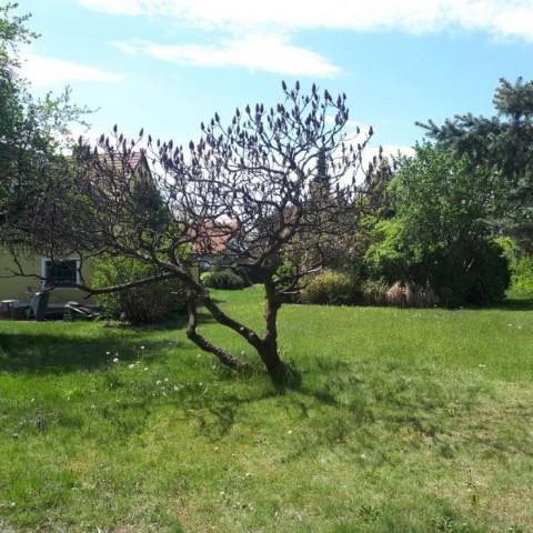 Klangzentrum Garten mit Wiese und Baum